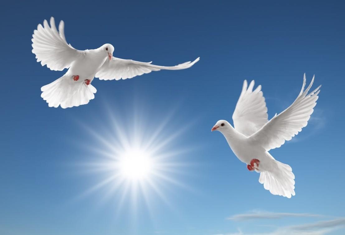desktop-pictures-of-birds-flying-wallpaper