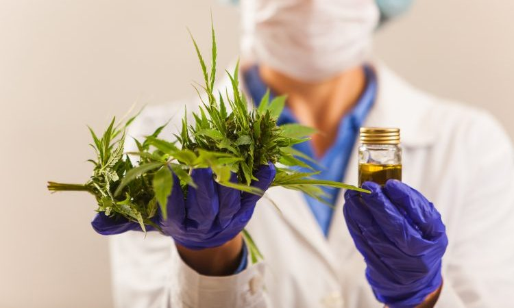 Two cannabis-based medicines approved for Britian's NHS
