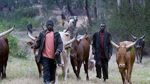 Fulani in Southern Kaduna open up on crisis rocking the area