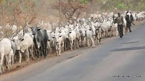 We're enslaved: Benue South farmers cries out over herders'invasion