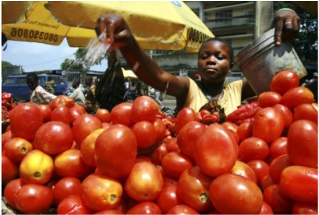 Prices of tomatoes, onions, pepper, others escalates across markets inLagos